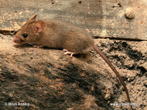 Deterring Mice